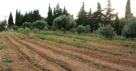 ΟΠΕΚΕΠΕ: Νέα πληρωμή 1,7 εκατ. ευρώ σε αγρότες
