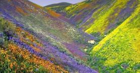 Η κοιλάδα των λουλουδιών