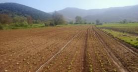 ΥΠΑΑΤ: Πληρωμές ύψους 633.434.763 εκατ. ευρώ στους αγρότες