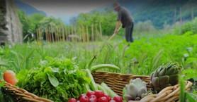 Εκδήλωση της Πρεσβείας της Σουηδίας στο Ηράκλειο για τη βιώσιμη καλλιέργεια και τροφή