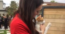 Νέα Ζηλανδία: Άνδρας παραδέχθηκε ότι σκότωσε κατά λάθος τη γάτα της πρωθυπουργού