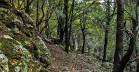 Ο Ορειβατικός Σύλλογος Χανίων στο Φαράγγι Χωστής