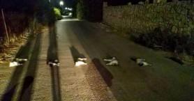 Φρίκη στα Χανιά! Βασάνισαν και σκότωσαν γάτες και τις έβαλαν στην μέση του δρόμου (φωτο)