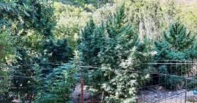 Τα δέντρα που είχαν στον κήπο τους έφεραν σε... μπελάδες (φωτο)