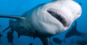 «Θα φάει τη βάρκα»: Έντρομοι ψαράδες ανακαλύπτουν ότι τεράστιος καρχαρίας κολυμπάει