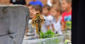Οι ώρες αγιασμού στα Δημοτικά Σχολεία – Νηπιαγωγεία του Δήμου Χανίων