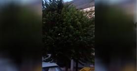 Ένα κλαδεματάκι στο δέντρο για να βλέπουν οι άνθρωποι στη Μυλωνογιάννη