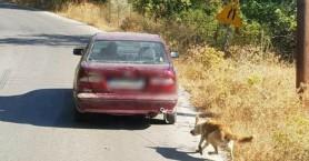 Σε σπίτι φιλοξενίας βρίσκεται ο σκύλος που τον έσερνε ηλικιωμένος δεμένο σε αυτοκίνητο