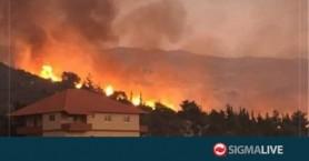 Λίβανος: Η χώρα θρηνεί τα δάση της που έγιναν στάχτη εξαιτίας των πυρκαγιών