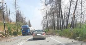 Προσοχή! Κλαδιά και δέντρα πέφτουν στην εθνική οδό (φωτο + βιντεο)