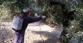 Δήμος Αποκορώνου: Συνεχίζεται ο τρίτος γύρος ψεκασμών