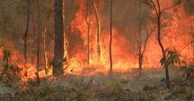 Αυστραλία: Τα απειλούμενα είδη επλήγησαν περισσότερο από τις πυρκαγιές