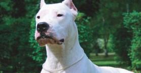 «Tη λάτρευε, φοβήθηκε και…»: Τι λέει ο σύζυγος της νεκρής γυναίκας που δάγκωσε σκύλος