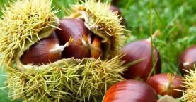 Ξεκινά στα Χανιά η διάθεση δενδρυλλίων καστανιάς ντόπιων ποικιλιών