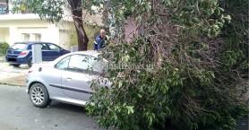 Μεγάλο κλαδί πλάκωσε αυτοκίνητο στο κέντρο των Χανίων