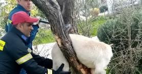 Ηράκλειο: Μικρά παιδιά έστειλαν φωτο του σκύλου για βοήθεια και η Πυροσβεστική τον έσωσε