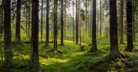Τώρα ξέρουμε πώς τα δέντρα παραμένουν ευθυτενή