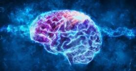 Τι κατάλαβαν οι επιστήμονες όταν είδαν μνήμες να σχηματίζονται στον εγκέφαλο