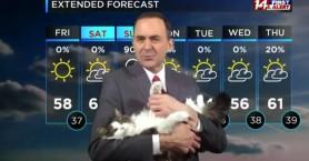 Γάτα παρουσιαστή δελτίο καιρού από το σπίτι γίνεται μασκότ
