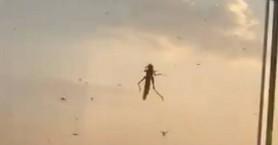 Σκηνικό εφιάλτη στο Ντουμπάι με σμήνη ακρίδων