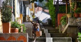 Σκύλος κάνει delivery από μίνι μάρκετ εν μέσω πανδημίας