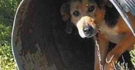 Του έκαναν έρευνα για όπλα αλλά τον έπιασαν & για τις συνθήκες διαβίωσης των 2 σκύλων του