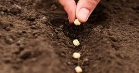 Προσοχή στους ιδιώτες που λαμβάνουν «ύποπτους σπόρους»