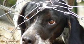 Κακοποίηση ζώων: Έρχονται αυστηρότερες κυρώσεις και ποινές - Αφορμή το συμβάν στα Χανιά
