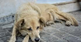 Μετά τα περιστατικά και στα Χανιά: Κακούργημα ο βασανισμός των ζώων - Ποινή έως 10 έτη
