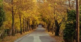 Το χωριό της Αρκαδίας με τον πιο «ρομαντικό δρόμο» στην Ελλάδα