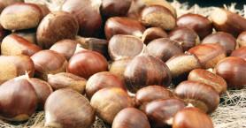 Διοργανώνεται δράση για δημιουργικές συνταγές με ορεινό κάστανο νομού Χανίων
