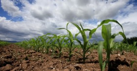 Μετασχηματίζονται ψηφιακά ΟΠΕΚΕΠΕ και ΕΛΓΑ - Το ψηφιακό μέλλον της γεωργίας