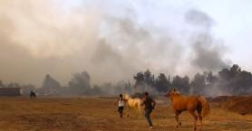 Φωτιά στη Βαρυμπόμπη: 250 άλογα μεταφέρθηκαν στο Ολυμπιακό Κέντρο Ιππασίας Μαρκοπούλου