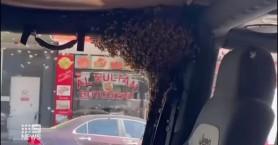 Αυστραλία: Γύρισε από τα ψώνια και βρήκε σμήνος από μέλισσες στο αυτοκίνητό του (βίντεο)