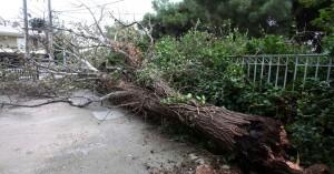 Προβλήματα από τους ισχυρούς νοτιάδες στην Κρήτη - Διακοπές ρεύματος σε διάφορα σημεία
