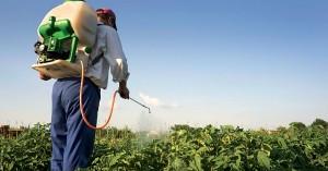 Έξι φορές πάνω από τον μέσο όρο η κατανάλωση φυτοφαρμάκων στην Κρήτη