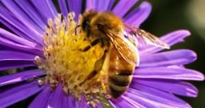 Ενημέρωση μελισσοκόμων από τη Διεύθυνση Αγροτικής Οικονομίας Ρεθύμνου