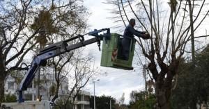 Κλάδεμα δέντρων στην οδό Μπουνιαλή από τον Δήμο Χανίων