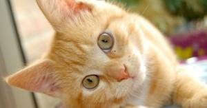 Δίνουν αμοιβή 6.000 ευρώ σε όποιον βρει γατάκι που χάθηκε στα Χανιά