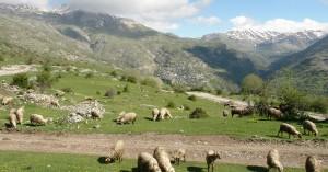 Σχέδιο αξιοποίησης όλων των μόνιμων βοσκοτόπων για τη στήριξη της κτηνοτροφίας