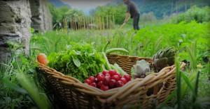 Εγκρίθηκε προϋπολογισμός 205,2 εκατ. ευρώ για δικαιούχους Βιολογικής Γεωργίας