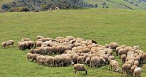 Ένα χρόνο η κτηνοτροφία στο περιθώριο