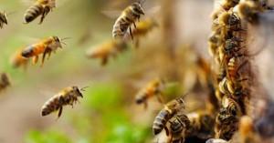 Μέχρι τέλος του χρόνου οι δηλώσεις διαχείμασης μελισσοσμηνών