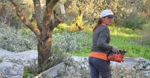Ένταξη επιλαχόντων νέων γεωργών και στην Περιφέρεια Κρήτης