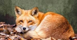 Τι κάνει η αλεπού στο παζάρι ή αλλιώς τι κάνει πρώην Υπουργός του ΚΙΝΑΛ στα Χανιά;