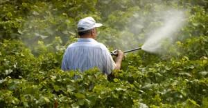 Ποια συμπεράσματα προέκυψαν από την έκθεση σε φυτοφάρμακα