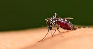 Εφαρμογή προειδοποιεί για την παρουσία… κουνουπιών