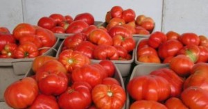 Επιπλέον κονδύλια για βιολογικές καλλιέργειες και στην Κρήτη