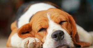 Νότια Κορέα: «Στοπ» στη σφαγή σκύλων για το κρέας τους