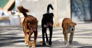 Ανεξέλεγκτη η αναπαραγωγή αδέσποτων στον δήμο Χανίων